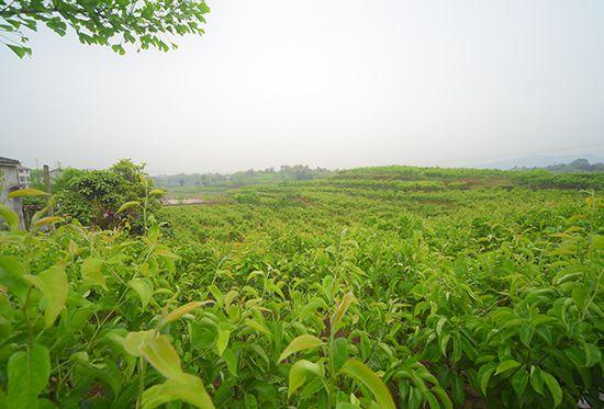 http://www.ncchanghong.com/qichexiaofei/24207.html