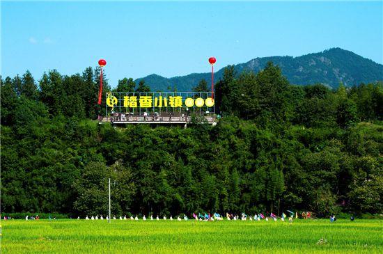 """乡村藏着""""致富路""""杭州建德青年""""农创客""""种水稻年收入40万打底"""