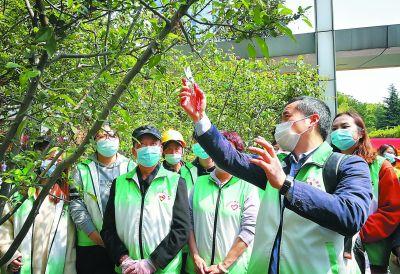 南京志愿者走进河西中央公园修枝剪叶美化环境