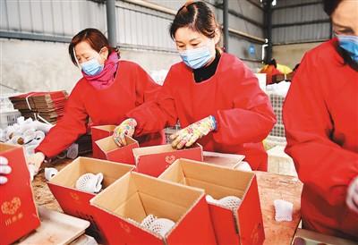 一季度全国农产品网络零售额达936.8亿元 增长31.0%