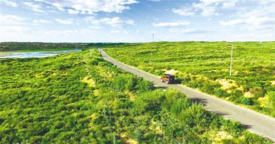 楡林市楡陽区孟家湾鎮中営盤ダム付近の植生(撮影・李羽佳)。