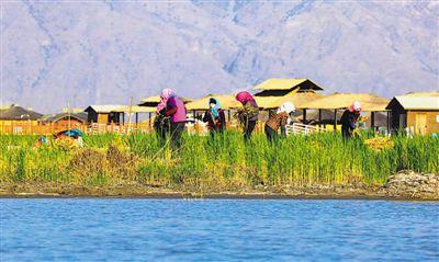 <p>    4月26日,工人在沙湖旅游区种植芦苇。春日的沙湖草长莺飞、风光优美,良好的湿地环境让候鸟们在这里栖息繁衍。为持续改善、优化生态环境,该景区计划今年种植挺水植物700亩、沉水植物300亩、浮叶植物200亩,目前种植计划已完成35%。</p>