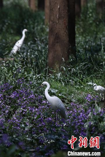 走进江苏兴化 感受自然和谐生态画卷