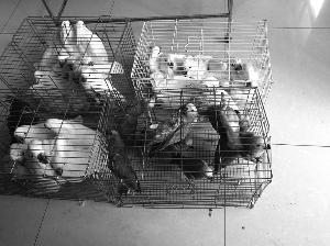 鹽城一隻飛丟的鸚鵡引出特大跨省出售野生動物案