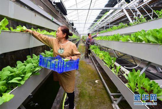 河北灵寿:现代农业助力脱贫攻坚