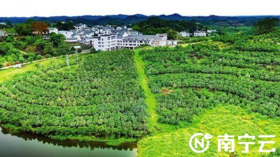 良庆区获广西2019年度市县党委和政府扶贫开发工作成效二类县区考核第一名