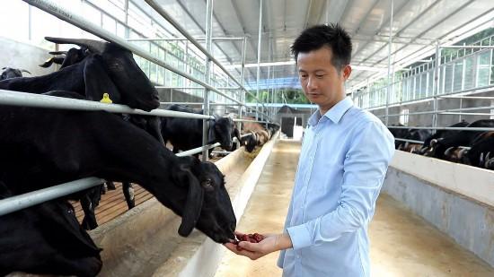 图为刘入源在他的黑山羊养殖基地查看情况