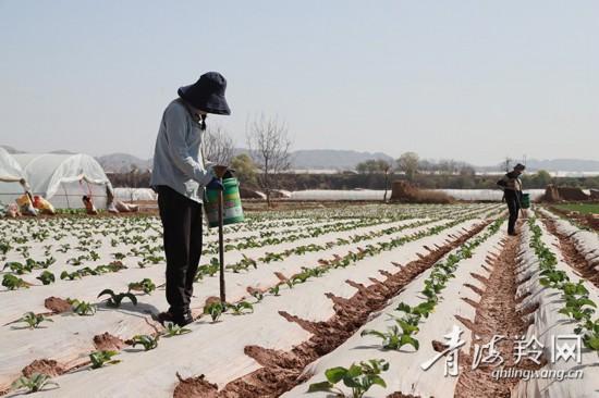 村民正在蔬菜地里追肥(5277289)-20200514081828.jpg