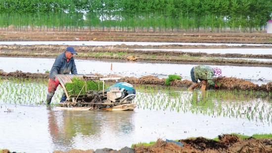 抢抓有利气候条件,有序拉开水稻插秧序幕