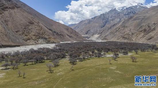 (2020珠峰高程测量)(4)珠峰自然保护区生物多样性得到有效保护