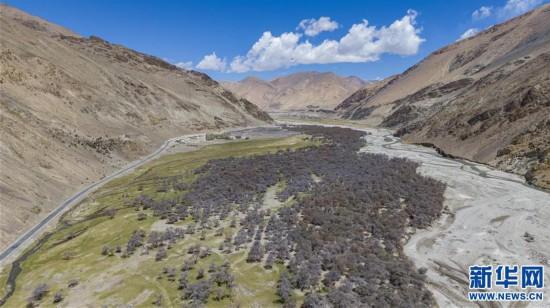 (2020珠峰高程测量)(7)珠峰自然保护区生物多样性得到有效保护
