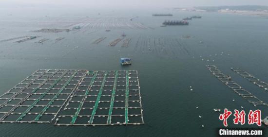 山東青島:伏季海上休漁生產兩不誤