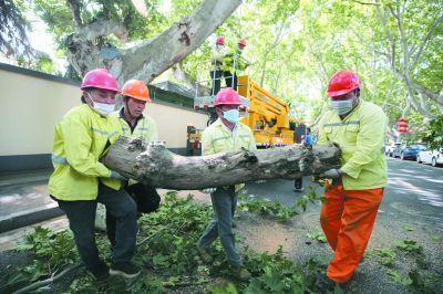 南京鼓楼园林部门修剪树枝及时消除安全隐患