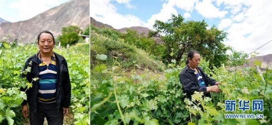 (脫貧攻堅·圖片故事)(9)藏東大地脫貧影像