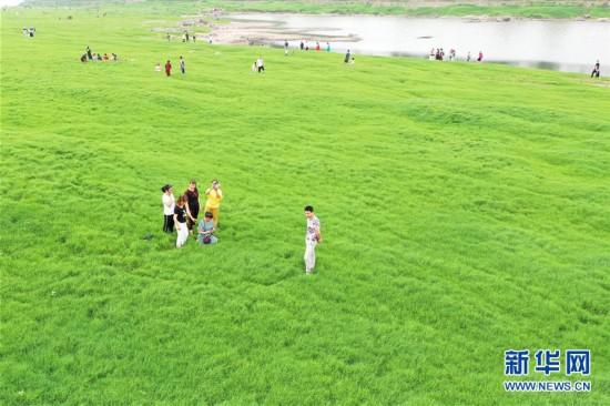 (社会)(1)重庆:长江水位回落现草海