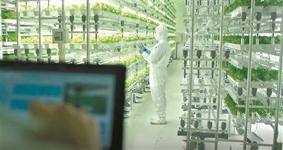 杨国强:打造规模化无人农场