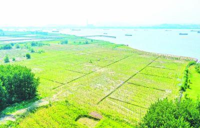 南京六合:船厂离岸 绿林回归