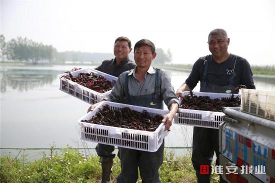 江苏盱眙姬庄社区:集体收入从30万跃至700万