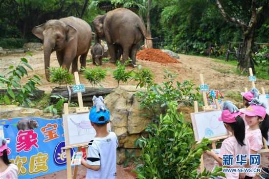 (社会)(7)广州:亚洲象家族再添新丁