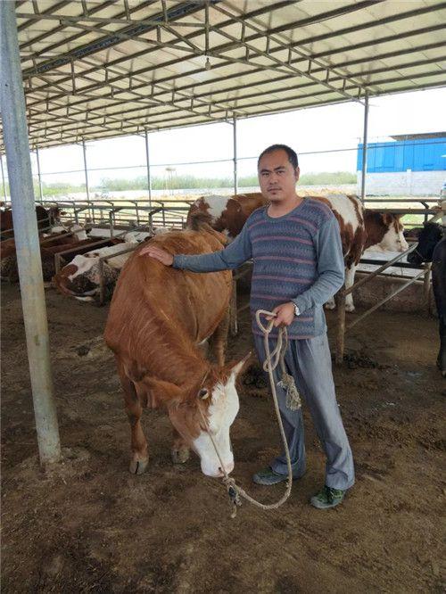 图为韦忠勇在养牛基地