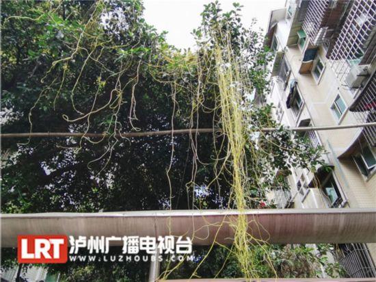 http://www.hjw123.com/huanjingyaowen/107129.html