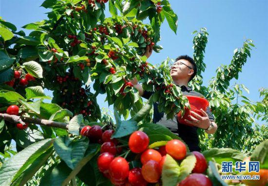 河北迁安:休闲农业促增收