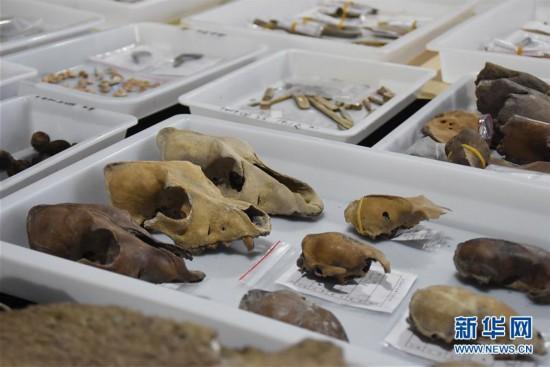 (图文互动)(3)浙江余姚发现早于河姆渡文化1000年的史前遗址
