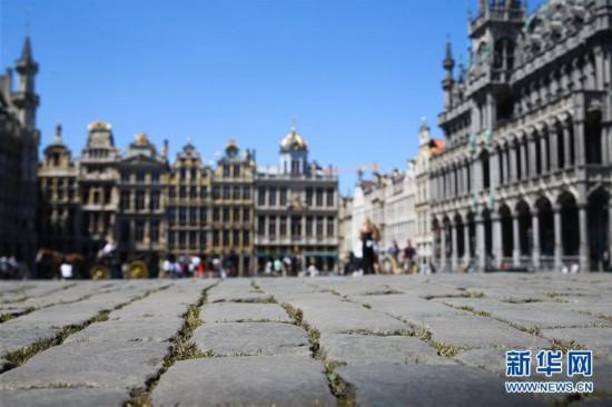 (国际)(1)比利时布鲁塞尔大广场:游客减少 砖缝长草