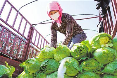 固原:蔬菜从产地到餐桌直供直销降价40%