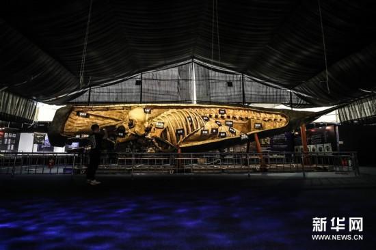 (社会)(6)抹香鲸塑化标本大连展出