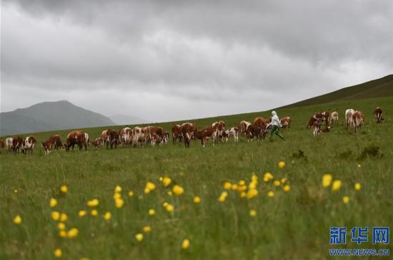 (图片故事)(10)草原上的游牧迁徙:水草丰美那畔行