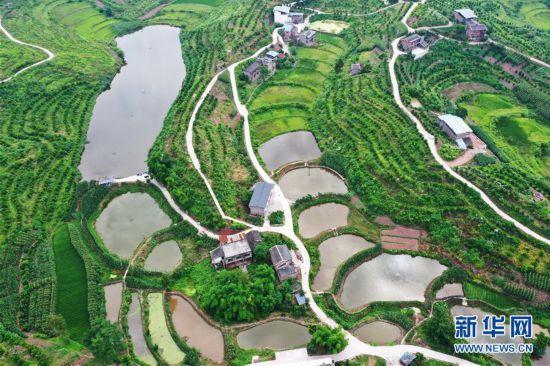重庆:临江镇福德村经济和生态效益双丰收