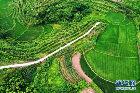 (环境)(4)重庆:夏日山乡美
