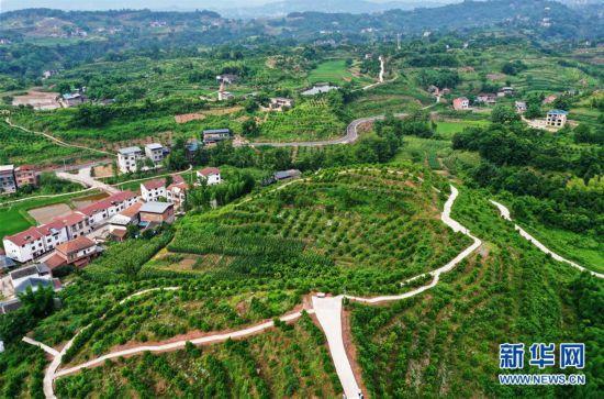 (环境)(2)重庆:夏日山乡美