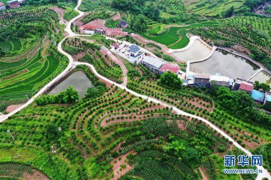 (环境)(3)重庆:夏日山乡美