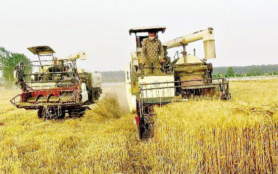 淮安市淮安區農民搶抓晴好天氣收割小麥