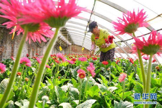 (经济)(1)河北唐山:特色种植助农增收