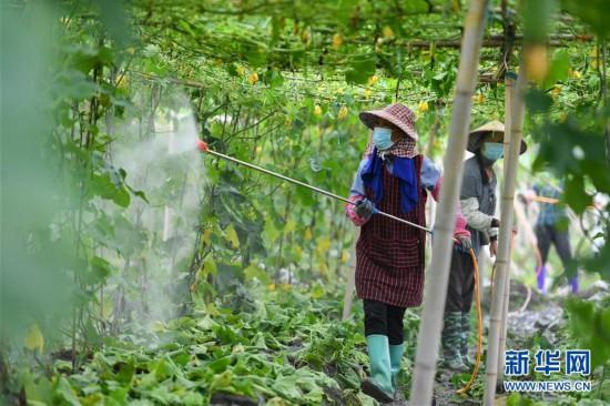 湖南永州:开展灾后生产自救