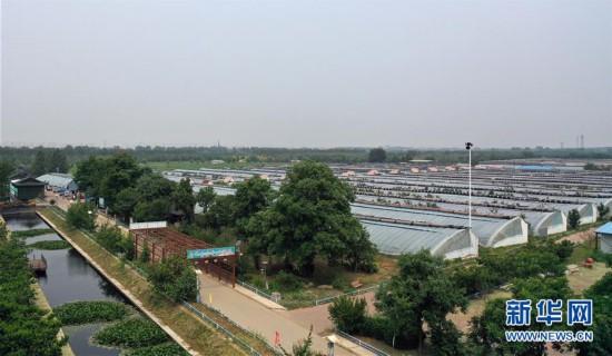 (社会)(5)天津武清:大棚葡萄迎来丰收季