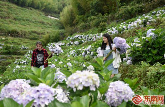 永春:高山花卉助力乡村振兴