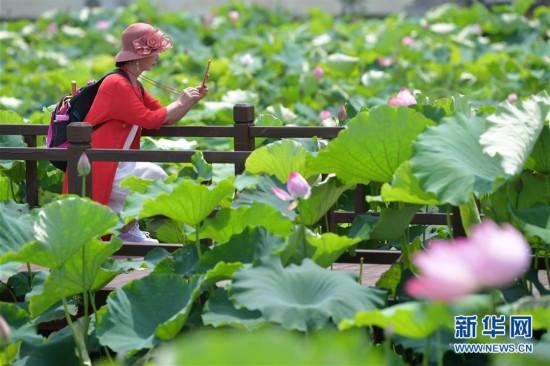 (经济)(1)江西南昌:观荷捕虾富农家