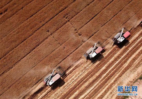 (新華全媒頭條·圖文互動)(9)特殊之年夏糧豐收背后的特殊之舉
