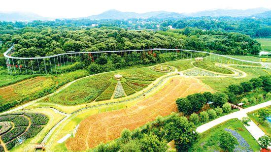 酒泉瓜州借力规范枸杞标准 3000亩示范地迎首茬采摘季