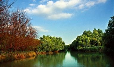"""麻辣财经:保护红树林,让它们成为""""金树林"""""""