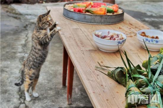 44,闻到徽州火腿的香味,猫咪也止不住流口水。(摄影:潘立�N).jpg