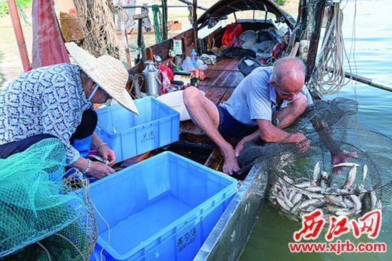 开渔首日,渔民收获颇丰。 西江日报记者 吴勇强 摄