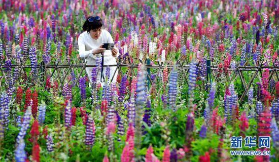 (美麗中國)(1)陝西太白:花開引客來
