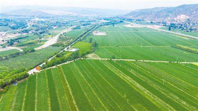 彭阳县推进草畜产业全域发展