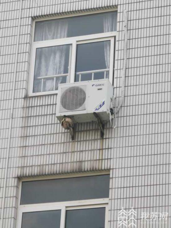 南京一高考考场外有两个马蜂窝 消防员用水枪打掉