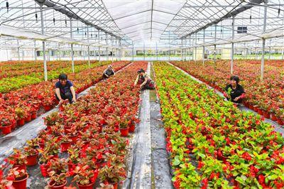 海安开展农业产业结构调整 让农民家门口就业